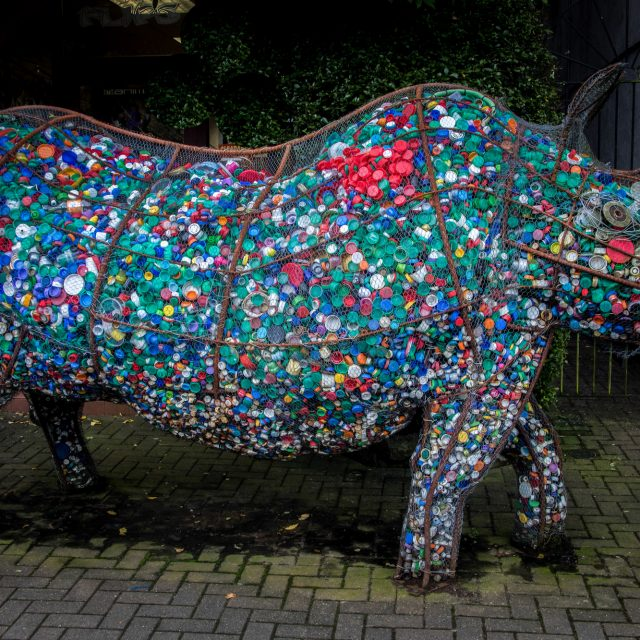 Edith the Rhino – community art project