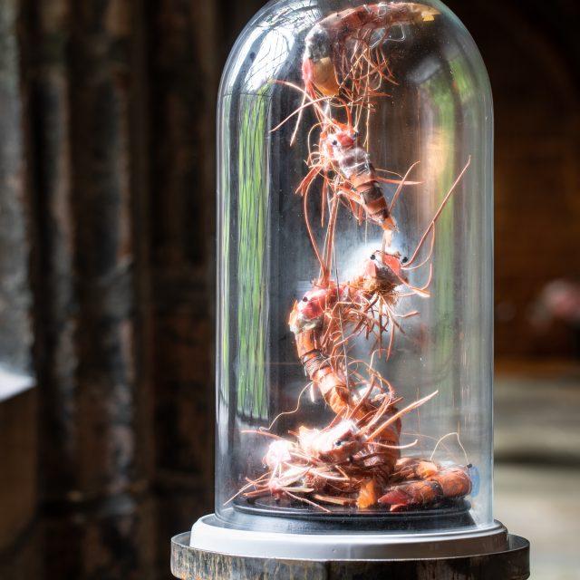 Krill sculpture made from beach plastics.