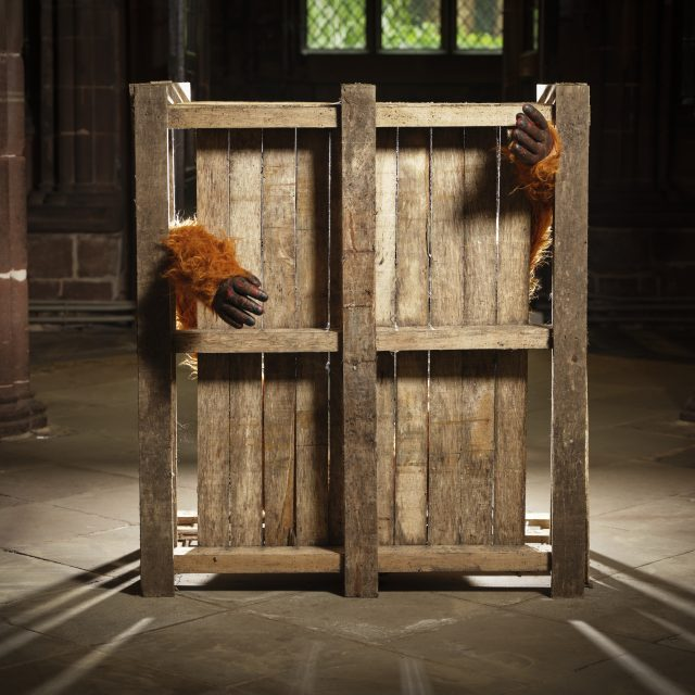 Orangutan pet trade & palm oil conflict