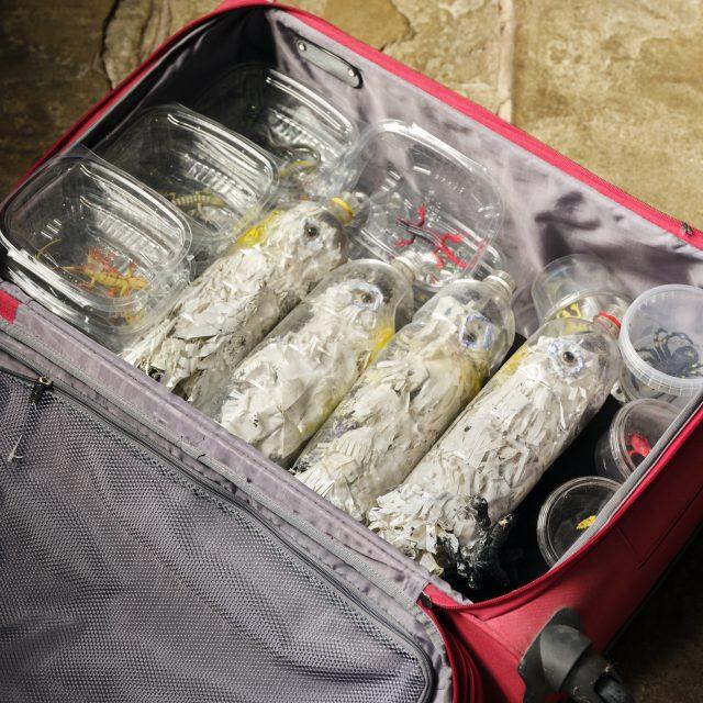 Bird smuggling trade
